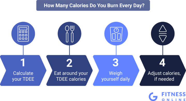 How Many Calories You Burn Every Day