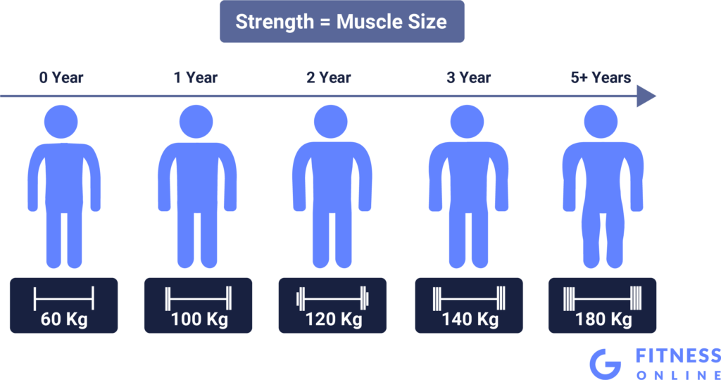 Strength Is Size - the More Weight You Are Able to Lift the More Muscle You Will Have
